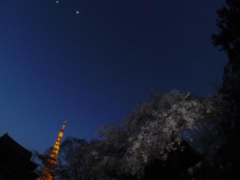 鐘楼堂前で桜と月と東京タワー