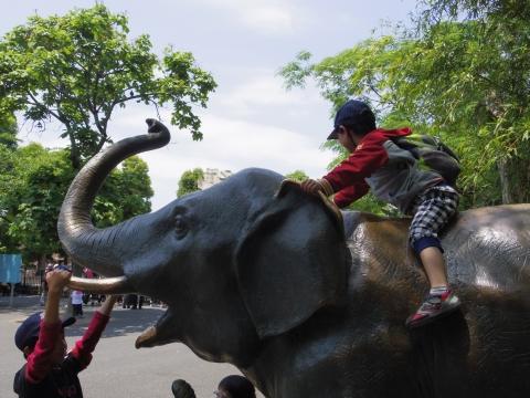 ゾウに乗る悠真