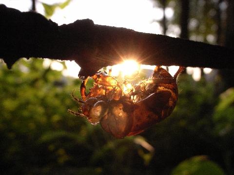 太陽を抱く空蝉