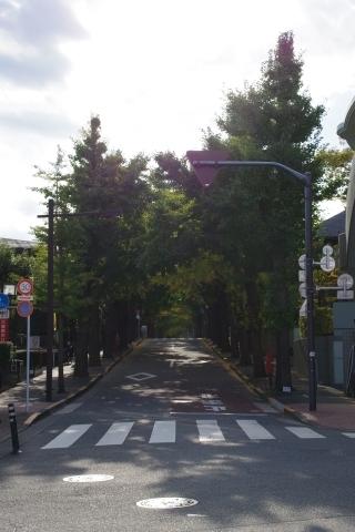 駅前からイチョウ並木