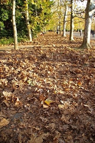 落ち葉に埋まるプラタナス並木