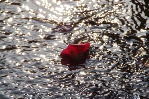流れの中の落ち椿
