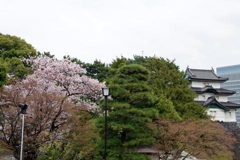 富士見櫓と桜1