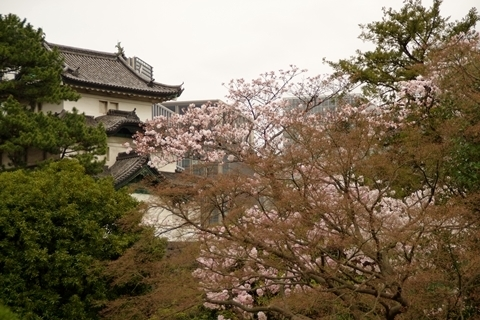 富士見櫓と桜2
