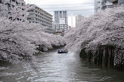 目黒川の桜・亀の甲橋
