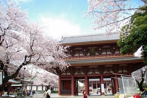 三門と桜と青空