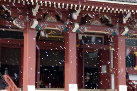 大堂と花吹雪