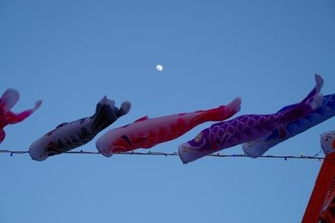必死に泳ぐ鯉のぼり