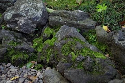 石に付いた苔