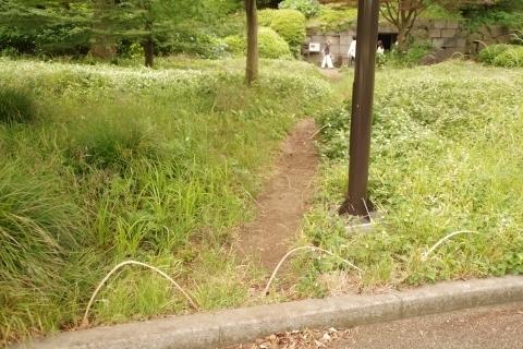 竹の簡易柵5