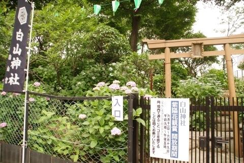 富士塚と紫陽花