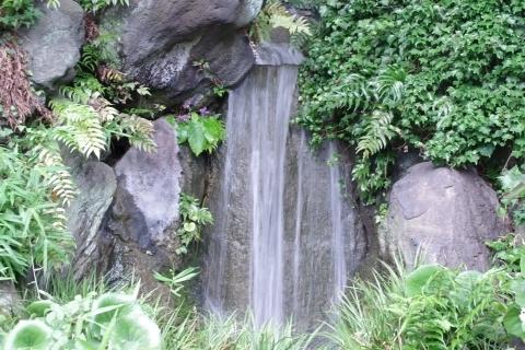 滝と岩煙草