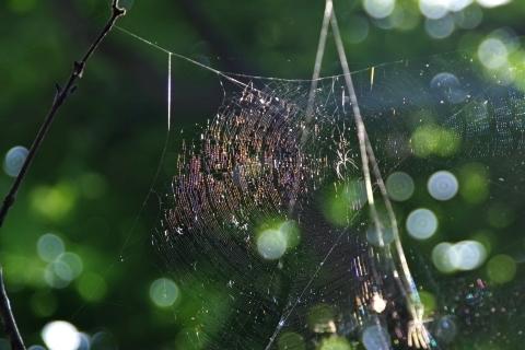 虹色クモの巣1