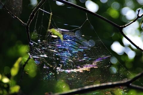 虹色クモの巣2