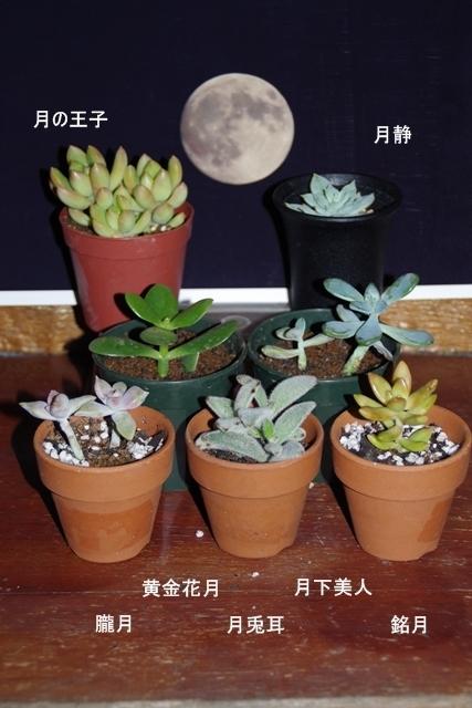 写真を囲む多肉植物2