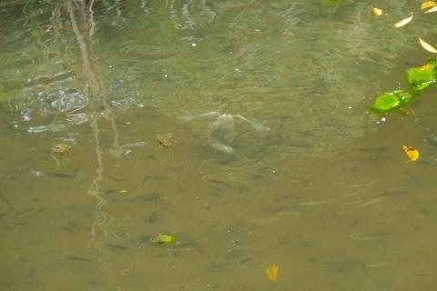潜水する幼鳥
