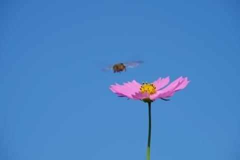 飛び込んできた虫