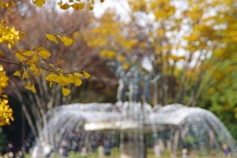 イチョウの葉越しの噴水