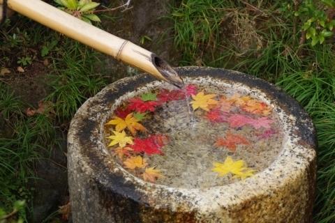 手水鉢のモミジ.JPG