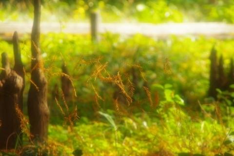 空中浮揚する落ち葉