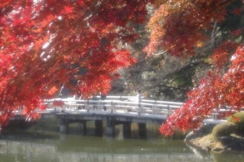 モミジと橋