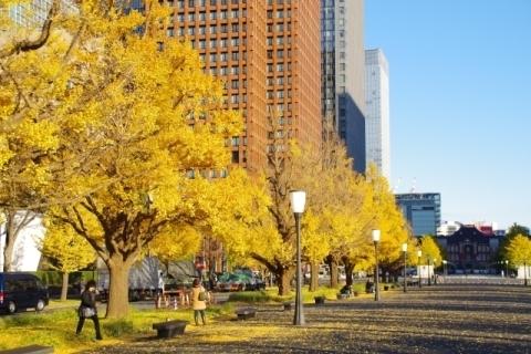 イチョウと東京駅1