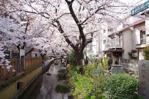 二ヶ領用水宿河原堤桜並木