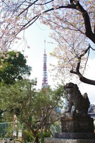 狛犬と桜と東京タワー
