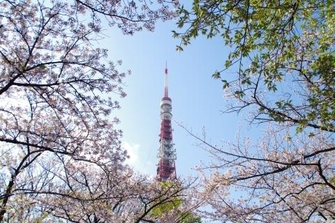 桜に囲まれた東京タワー