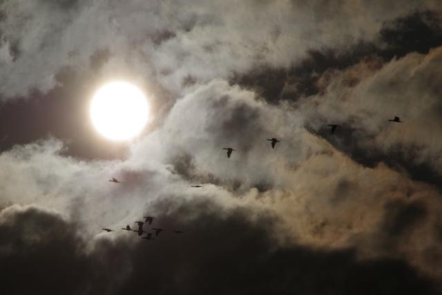 太陽とカワウ