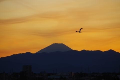 夕暮れの富士山とダイサギ