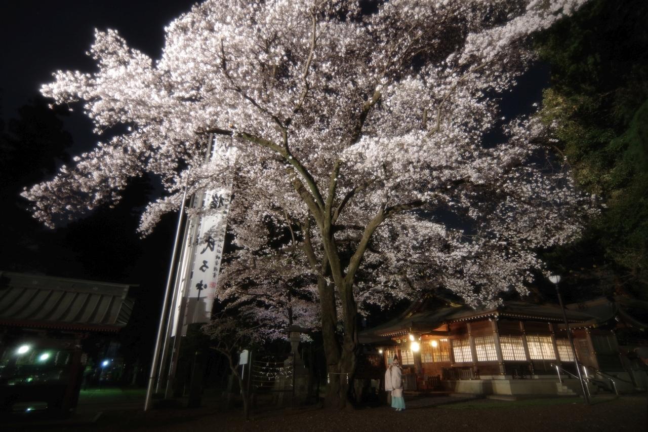 桜の下で龍笛の音
