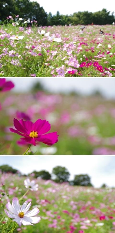 花の丘を見上げて1