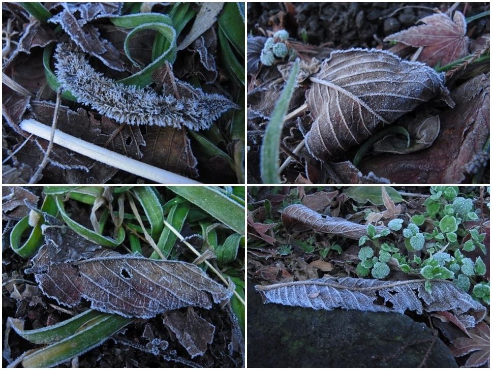 落ち葉に降りた霜