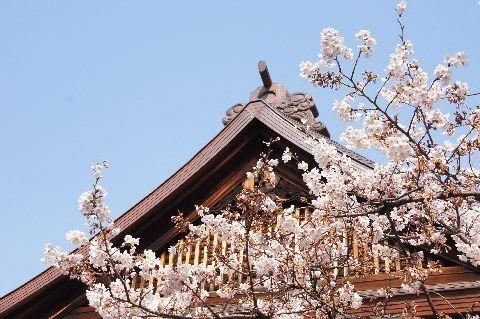 靖国神社・能楽堂と桜