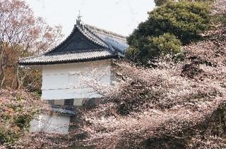 田安門と桜