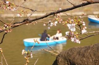 お花見ボート