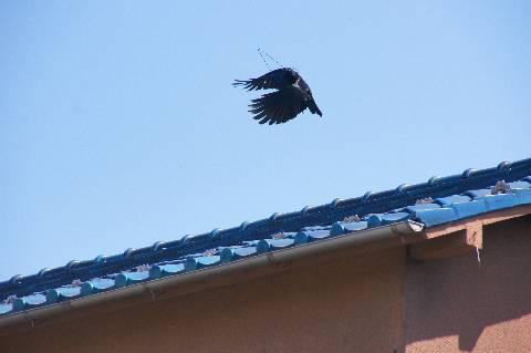 屋根を越えて