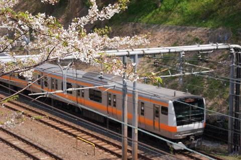 桜に彩られた中央線