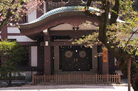 靖国神社斎館前の桜吹雪