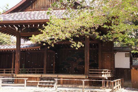靖国神社神楽殿前の桜吹雪 その1