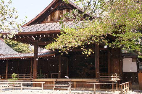 靖国神社神楽殿前の桜吹雪 その2