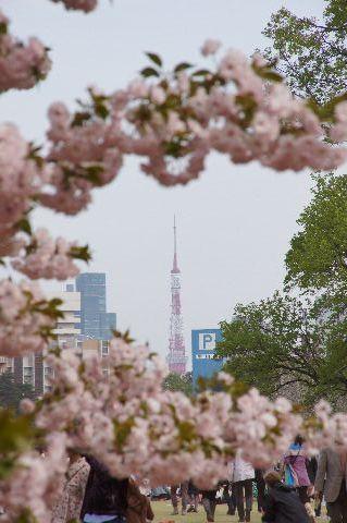 一葉と東京タワー