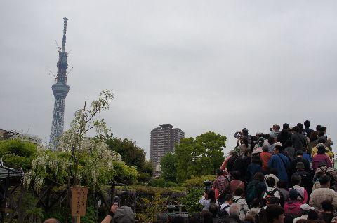 亀戸天神・太鼓橋と東京スカイツリー