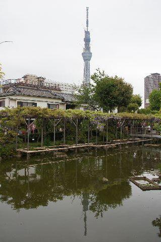池に映る東京スカツリー