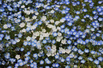 青に交じる白い花