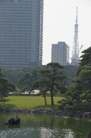 東京タワーを眺める鵜