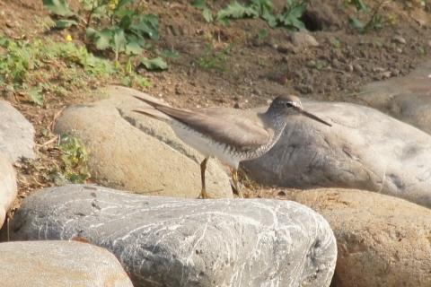 この鳥はなんて鳥?