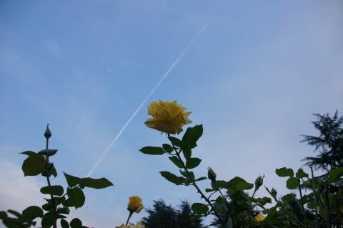 飛行機雲に手を振るかぐや姫