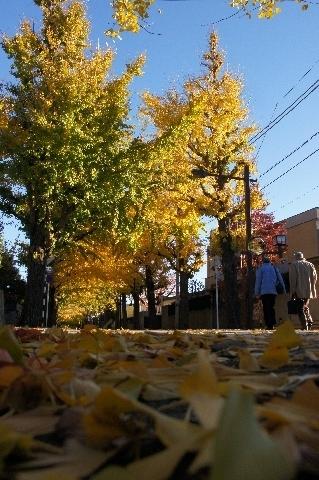 並木を歩く老夫婦